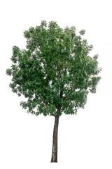 Beautiful shaped Tree isolated on white background