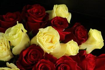flowers, rose,