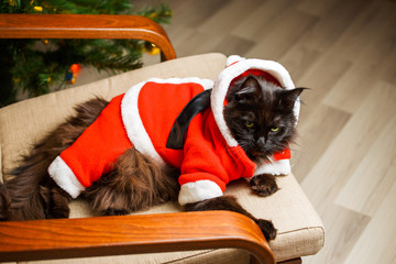 Christmas photo of black cat in Santa costume in armchair