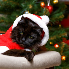 Picture of black cat in Santa costume in armchair