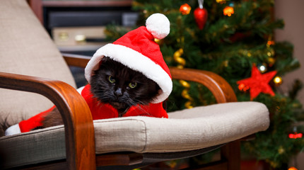 New Year's photo of black cat in Santa costume