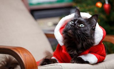 Portrait of festive cat in Santa costume sitting at chair