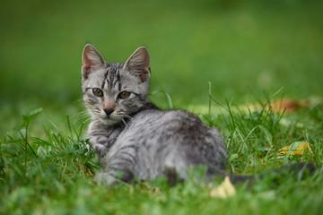 kitten in gras