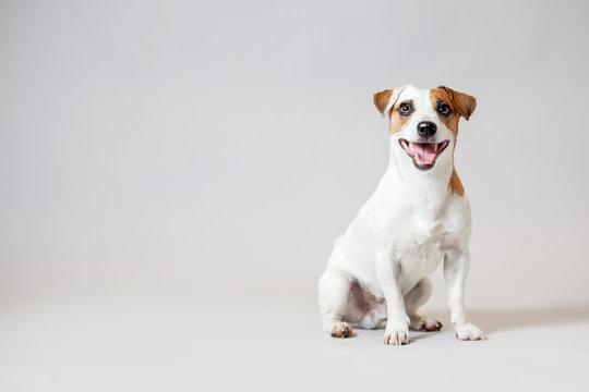Smiling dog at studio