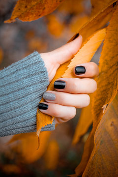 Beautiful hands with manicure hold autumn leaves.Manicure - Beauty treatment photo of nice manicured woman fingernails.