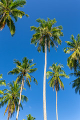 Palm trees against blue sky on Koh Kood island in Thailand
