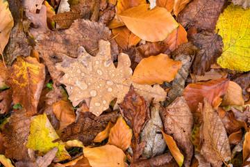Herbst Blätter auf dem Waldboden