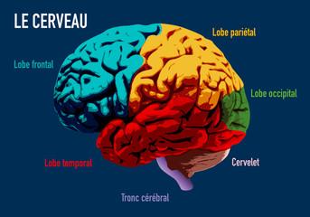 cerveau - médecine - intelligence - santé - mentale - symbole - médecin - schéma - maladie - neurone