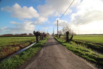 Small countryroad in the Zuidplaspolder in Moordrecht, The Netherlands. On the Horizon is a railroad crossing, knotted willows on the side of the road and blue sky with white clouds