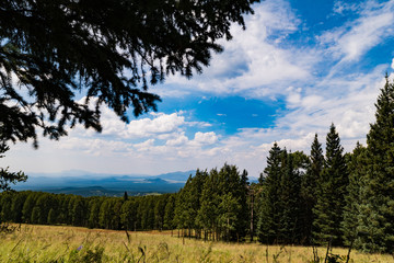 Fir, Spruce, Pine Trees: Arizona Snowbowl Landscape View