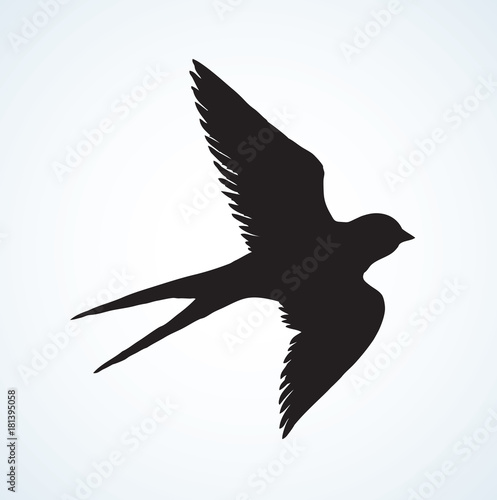 Vector Drawing Of A Series Sketches Birds Swallow