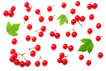 Red berries of Viburnum (arrow wood) with green leaf isolated on white background top view