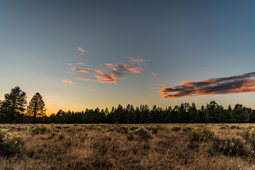Flagstaff Arizona Ponderosa Pine Sunset