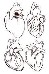 A set of human hearts.