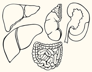 Healthy viscera system part