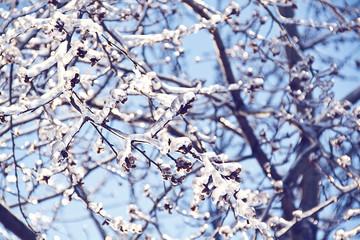 замороженные ветки со льдом