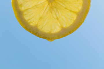 Lemon slice, macro