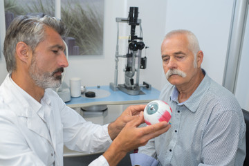 ophthalmologist with eye model showing senior patient