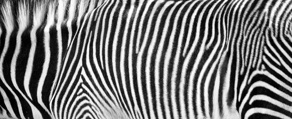 Zelfklevend Fotobehang Zebra Zebra Print Black and White Horizontal Crop