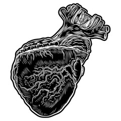 Sketch of human heart. Hand drawn anatomical boho style drawing for print, t-shirt, card, poster. Contemporary patch element, sticker. Vector.