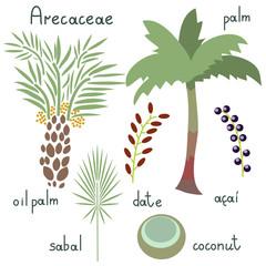 Arecaceae plants set