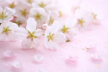 Wall Mural - 桜の花 ピンクの和紙背景