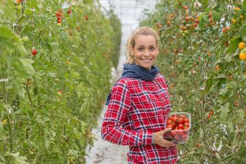 tomatoes plantation