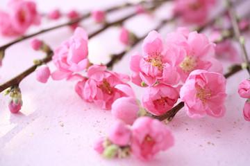 花桃 和紙背景