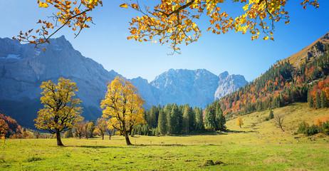 beautiful maple ground in autumn - famous austrian hiking area