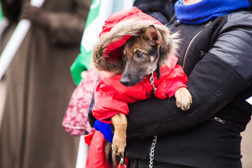 Dog mongrel in red clothes in the hands of a woman