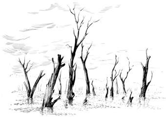 Swamp graphic black white landscape sketch