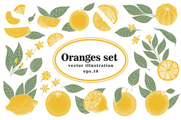 Set of hand drawn citrus illustrations, whole and cut oranges with leaves in sketch style. Vector vintage illustration. Orange slices.