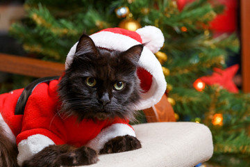 Christmas image of black cat in Santa costume at armchair