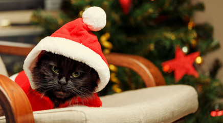 Image of New Year's cat in Santa costume sitting at chair