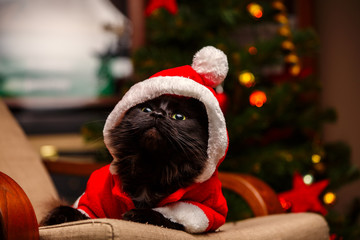 Picture of festive cat in Santa costume sitting at chair