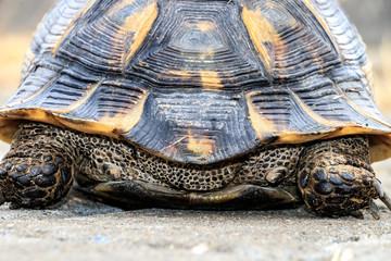 Turtle on cobblestones