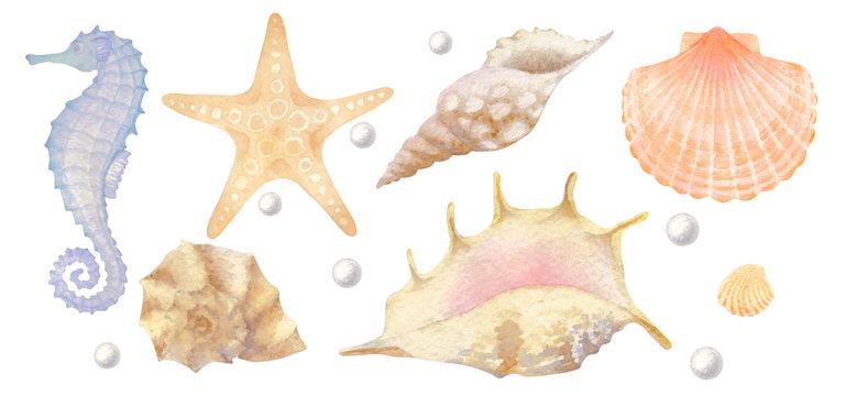Set of watercolor sea elements: seashells, starfish, seahorse, pearl.
