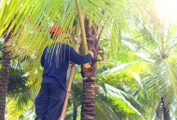 A man cutting leaves of palm