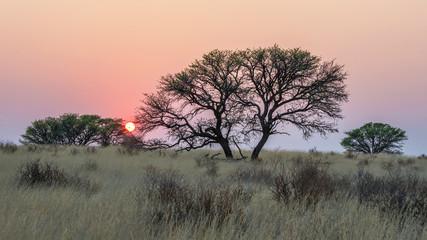 Sunrise in the Kalahari