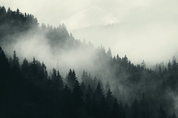 dark forest and mountains, foggy landscape