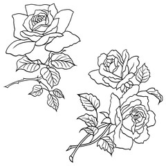 Hand drawn roses flowers vector set