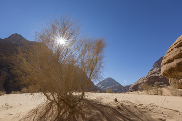 Dry Bush with sun in the Wadi Rum desert, Jordan