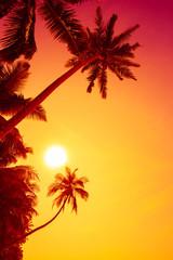 Vivid tropical sunset