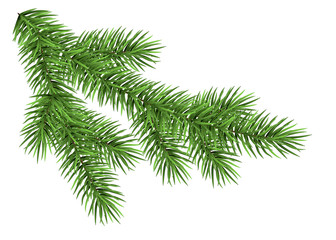 Realistic Christmas tree branch.