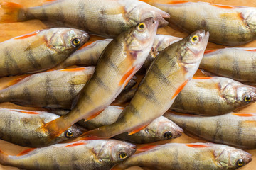 Fresh fish. Fresh river fish perch. On a yellow wooden background. Top view