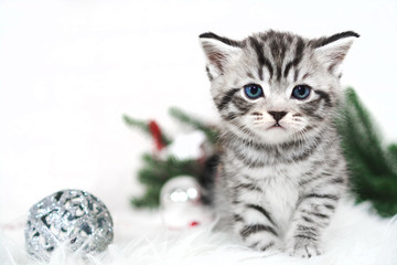 Striped kitten and Christmas tree, balls. Kitten new year