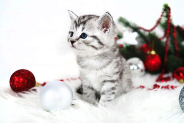 Lovely kitten with Christmas balls and a Christmas tree. New year kitten