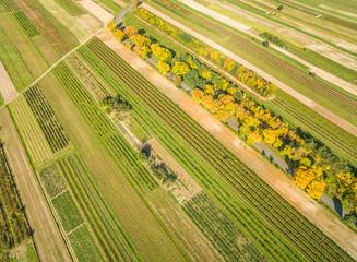 Krajobraz wiejski, z drogą przez pola uprawne, widziany z lotu ptaka. Drzewa przy drodze w jesiennych kolorach.