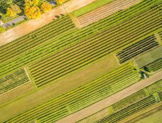 Pola uprawne z lotu ptaka. Krajobraz wiejski jesienią, widziany z powietrza.