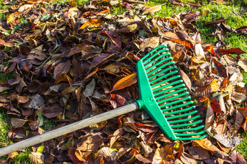 The rake on the pile leaves and grass
